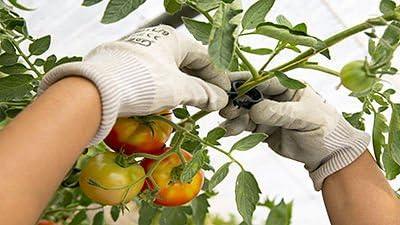 PAMPOLS 100 Clips o Soportes para tomateras y Otras Flores ...