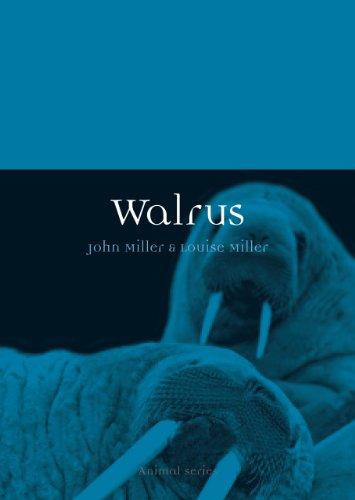 Walrus Animals (Walrus (Animal))