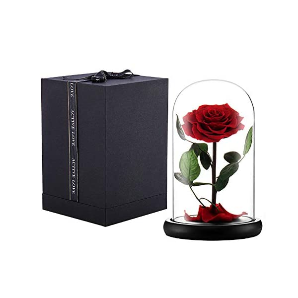 puto Preserved Real Rose Eternal Rose in Glass Dome Gift for Her Valentine's Day Birthday Mother's Day Christmas Anniversary (Red)