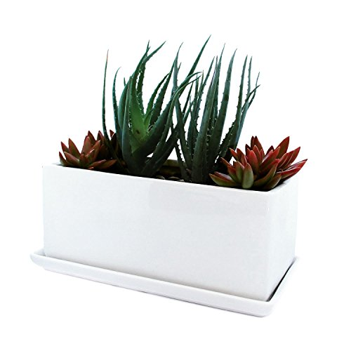 Succulent and Herb Planter Pot with Removable Tray, Window Box In A Modern Ceramic (Herb Window Box)