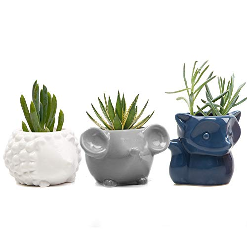 Chive - Set 3 Animal Pot Mouse, Hedgehog, Fox Shape Succulent Cactus Planter 3 Inch Ceramic Flower Plant Container, Indoor/Outdoor Garden and Home Decor,(White, Blue, Grey)]()