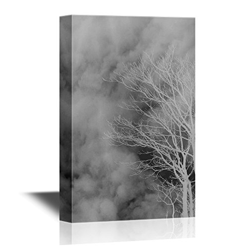 Tree Branches Against Cloudy Sky in Black and White Gallery