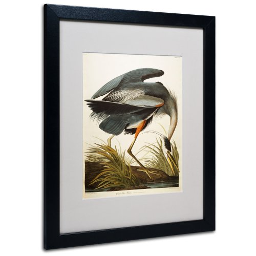 Great Blue Heron Matted Artwork by John James Audubon with Black Frame, 16 by ()