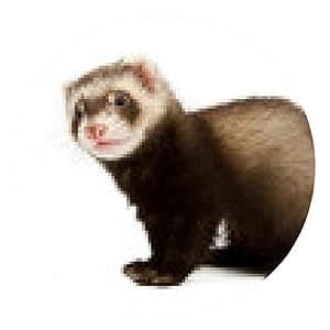 alfombrilla de ratón hurón se sienta - ronda - 20cm