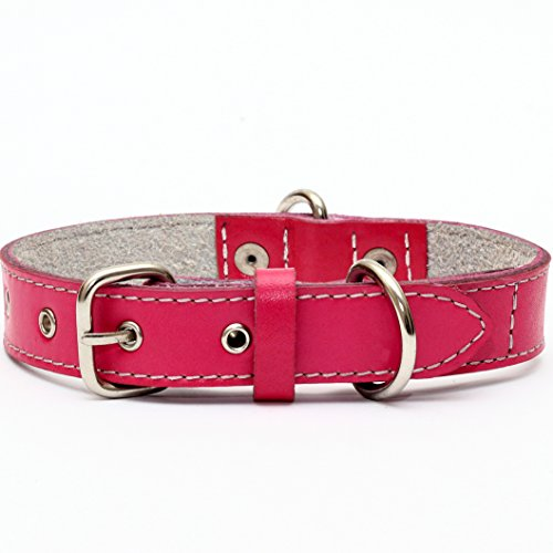 Premium Leather Collars with Stainless Steel Buckles (12