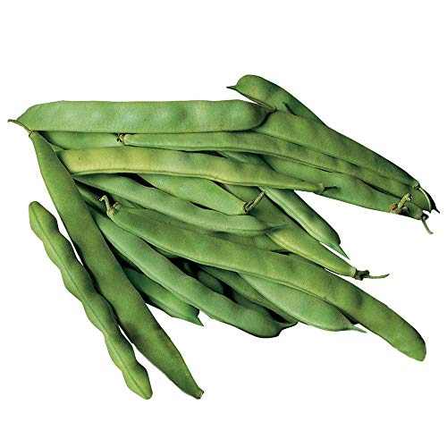 (Roma II Bush Bean Seeds, 30 Premium Heirloom Seeds, Fabulous & High Yield!, (Isla's Garden Seeds), Non GMO, 100% Pure, 90% Germination Rates, Highest Quality Seed)