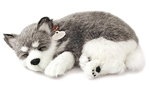 Husky Puppy (Realistic Breathing Alaskan Husky - Perfect Petzzz Life Like Husky Dog)