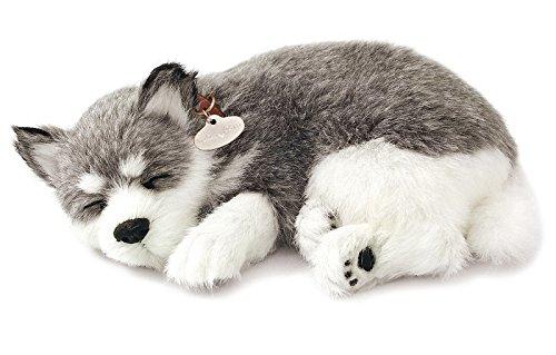 Puppy Husky (Realistic Breathing Alaskan Husky - Perfect Petzzz Life Like Husky Dog)