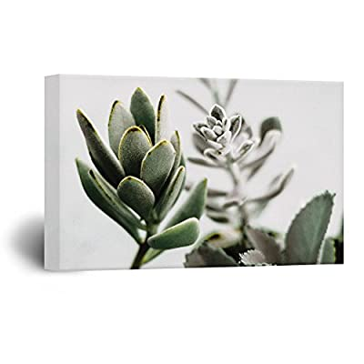 Leaves of Succulent Plants, That's 100% USA Made, Incredible Composition