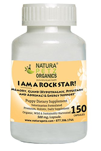 I AM A ROCK STAR! Memory, Gland  and Energy Support* for Pup