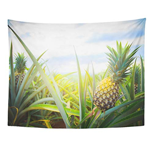 Tarolo Decor Wall Tapestry Colorful Plantation Pineapple Tropical Fruit Growing in Garden Space for Green Field 80 x 60 Inches Wall Hanging Picnic for Bedroom Living Room Dorm ()