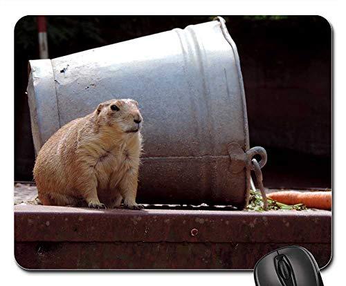 Mouse Pad - Marmot Rodent Croissant Mankei Gophers Fur ()