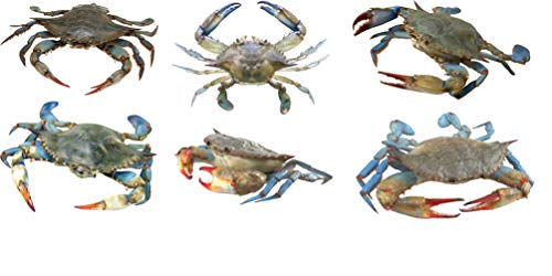 Blue Crab Decals - Collection One - 6 Vinyl Decals - Indoor/Outdoor Use (Decals Vinyl Collection)