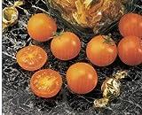 yellow cherry tomato seeds - Sunsugar Golden Cherry Tomato - 20 Seeds