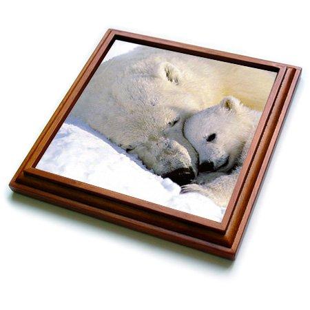 3dRose trv_516_1 Polar Bear and Cub Trivet with Ceramic T...