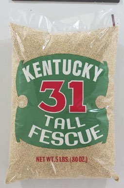 Barenbrug Kentucky 31 Tall Fescue Grass Seed 1000 Sq. Ft. Polybagged 5 Lb.