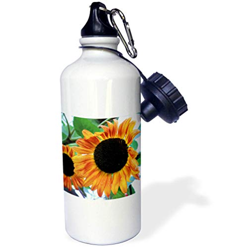 3dRose Stamp City - Flowers - Photograph of a Orange and Yellow Sunflower Growing in Our Garden. - 21 oz Sports Water Bottle (wb_295278_1) by 3dRose