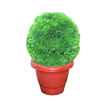 Muren Decorative Artificial but Natural Looking Round Grass Pot for Home Office decore