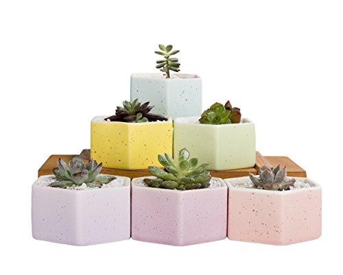 Mkono Set of 6 Ceramic Small Plant Pots 3 Inches Succulent Planters Indoor, Hexagon (Raised Planter Indoor)