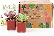 Succulent Subscription Boxes - 2 Succulents/Month