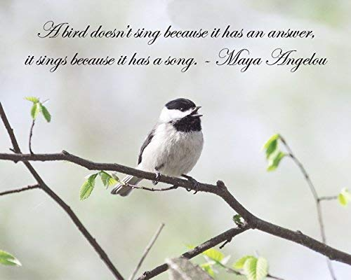Quote Wall Art Maya Angelou Inspirational Print A Bird Doesnt Sing