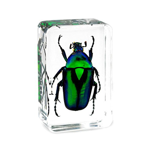- QTMY Insect in Resin Specimen Collection Paperweight for Office Desk, for Men Biology Science Teacher Kids Education (Green Cockchafer Beetle)