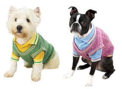 Preppy cable knit sweater & polo shirt mock twin set for dog pet apparel clothing ()