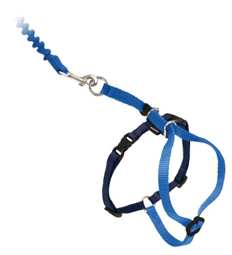 Buy harness & leash