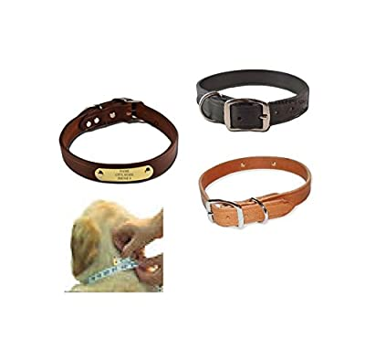 Warner Brand Cumberland Leather Dog Collar + FREE Engraved Brass ID tag