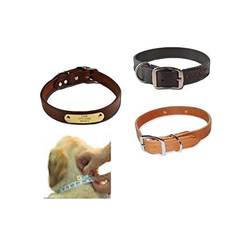 Warner-Brand-Cumberland-Leather-Dog-Collar-FREE-Engraved-Brass-ID-tag