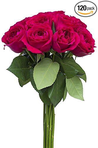 Amazoncom 120 Stems Fresh Cut Hot Pink Garden Rose Bouquet