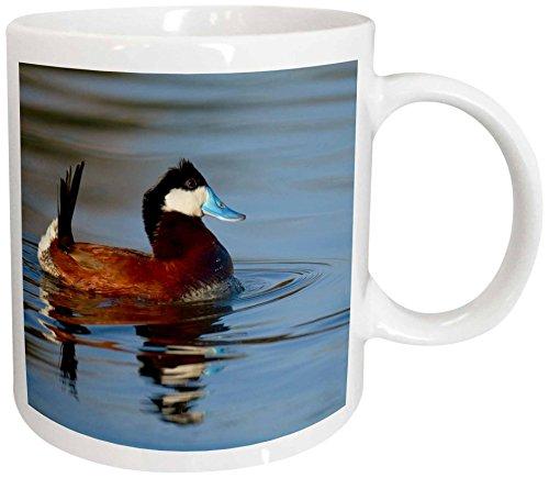 3dRose 92248_2 Male Ruddy Duck, Henderson, Nevada-US29 MPR0067-Maresa Pryor Ceramic Mug, 15 oz, White