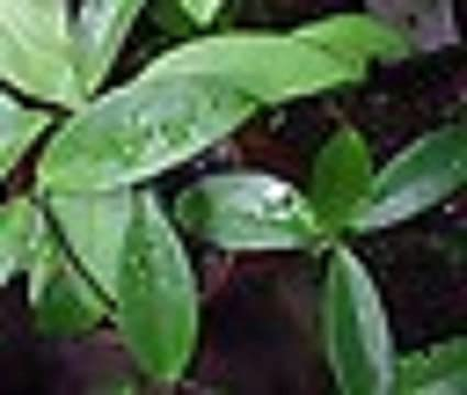 White And Green Leaves House Plant on white and green leaves weed, epipremnum pothos house plant, potted white azalea plant, serene peace plant, white calla lily plants,