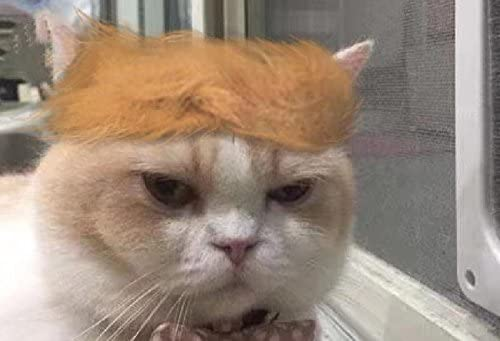 juguete para Halloween Navidad disfraz de cabeza de perro fiestas Fuji Peluca de gato para mascotas festivales