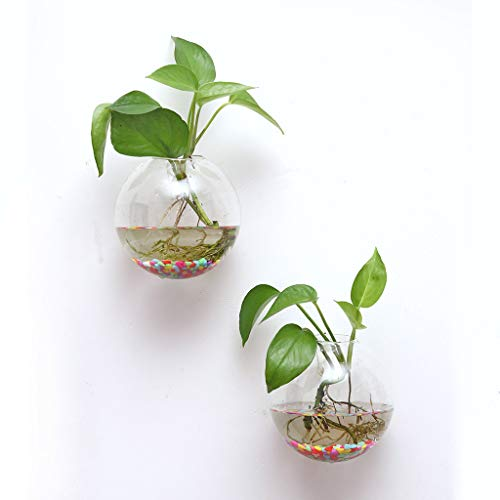m·kvfa 6Pcs Glass Planters Wall Hanging Planters Round Air Plant Pots Wall Plant Container Glass Plant Pots Flower Vase Air Plant Terrariums