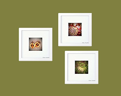 Amazoncom Set Of 3 Framed Gallery Pictures 8x8gallery Wall Decor