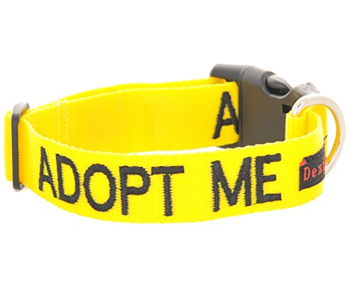 ADOPT ME Yellow Color Coded S-M Buckle Dog Collar (Needs A Home) Donate To Your Local Charity