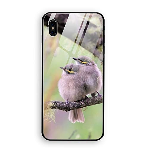 Bird Branch Honeyeater iPhone X Case Luxury Tempered Glass Back Cover with Soft TPU Bumper Frame Shock Absorption 360 Degree Full Protection