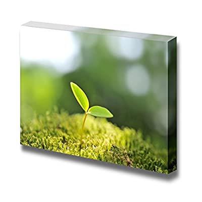 Canvas Prints Wall Art - Green Sprout/Seedling of New Life in Spring | Modern Wall Decor/Home Art Stretched Gallery Canvas Wraps Giclee Print & Ready to Hang - 24