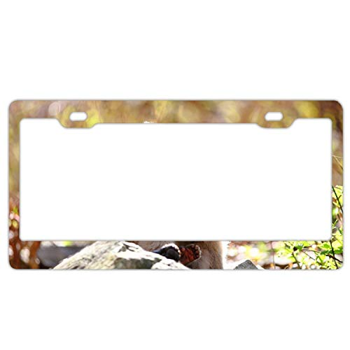 Elvira Jasper Monkey Rock Steam Tenderness Care Personalized License Plate Frame Covers Metal Gills