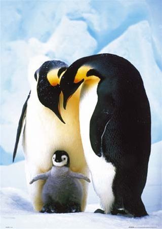 March of the Penguins Family Cute Animal Nature Poster 24 x