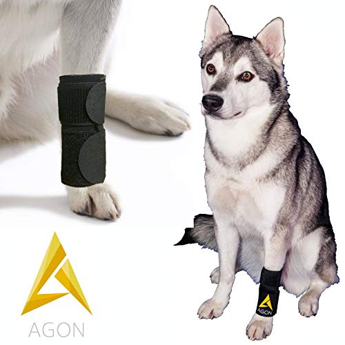 AGON Dog Canine Front
