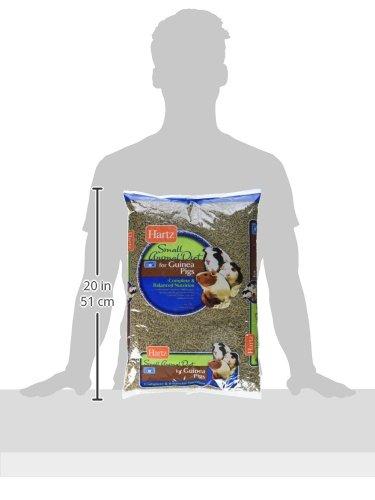 Hartz-Small-Animal-Diet-for-Guinea-Pigs-1-Pack-10-lb