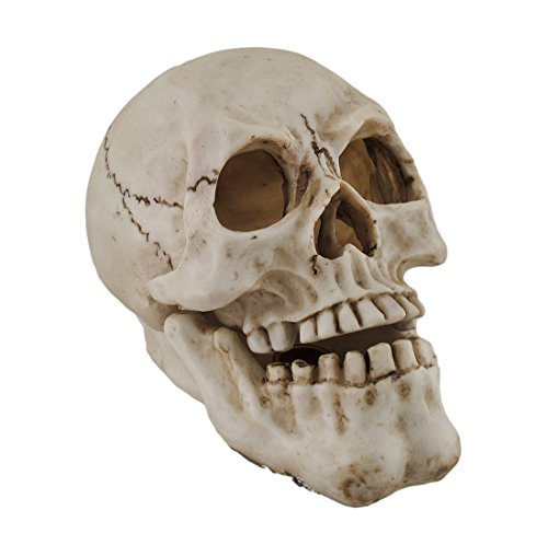 Zeckos Human Skull Shaped Incense Burner Box