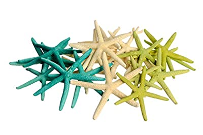 Green, Teal, and Natural Finger Starfish for Decoration, 24