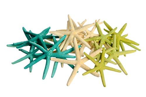 Green Natural Finger Starfish Decoration