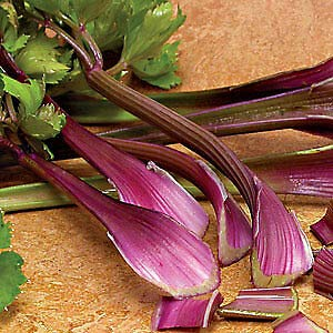 Celery Giant Red 5,000 Seeds