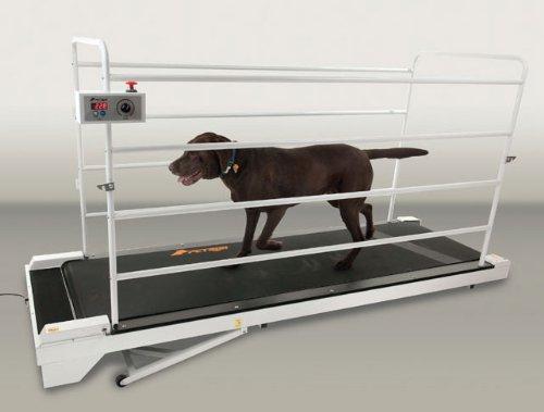 PetRun PR730 Dog Treadmill
