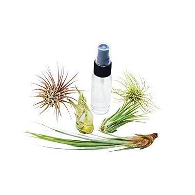 5 Pack Air Plant Assortment w/Spray Bottle / 5 Different Plant Varieties/Up t : Garden & Outdoor
