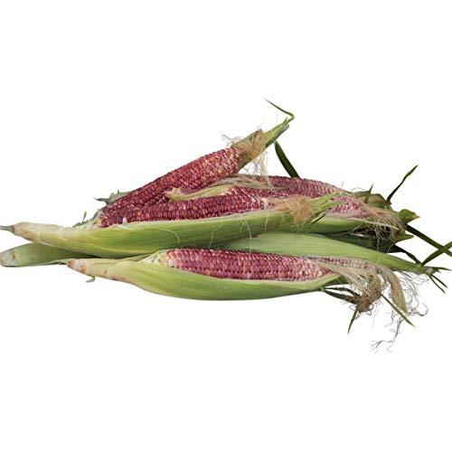 Burpee Ruby Queen Sweet Corn Seeds 200 seeds